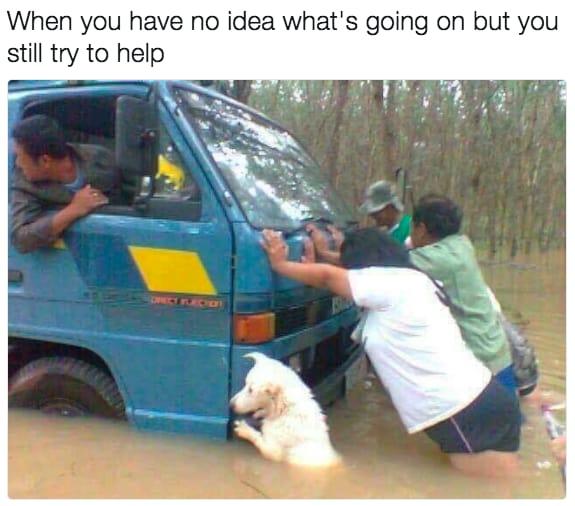 dog memes58