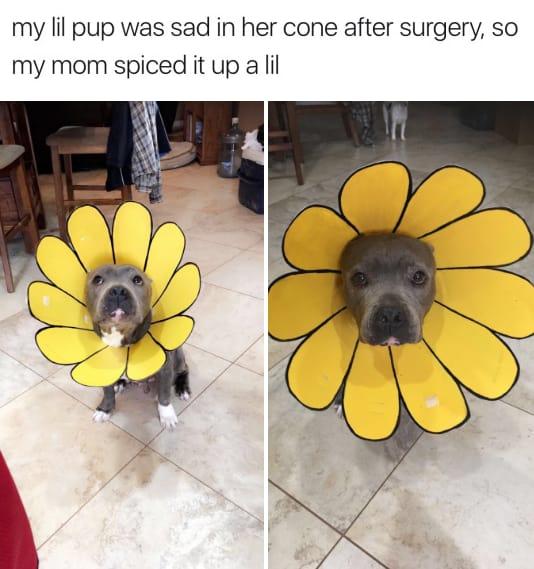 dog memes62