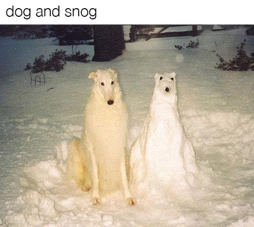 dog memes63
