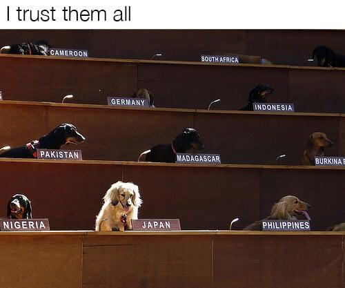 dog memes64