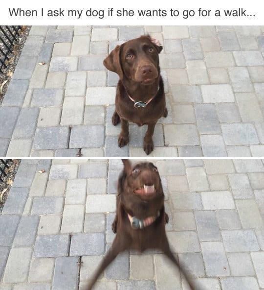 dog memes7