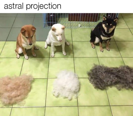 dog memes71