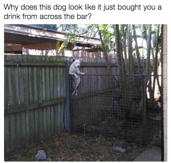 dog memes73