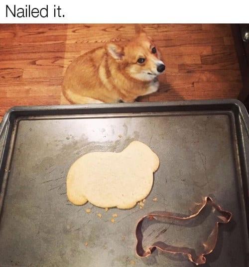 dog memes79