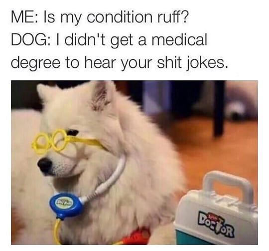 dog memes8