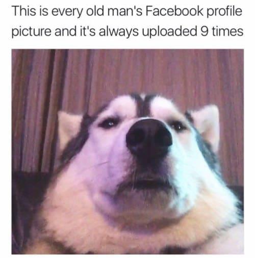dog memes87