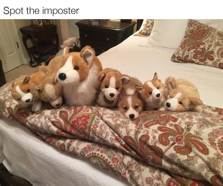dog memes89