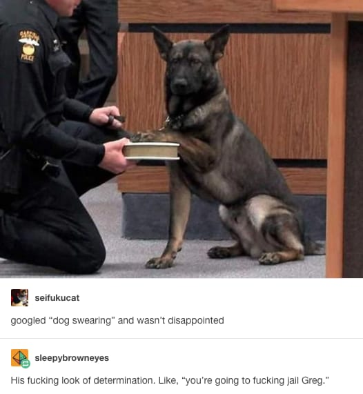 dog memes9