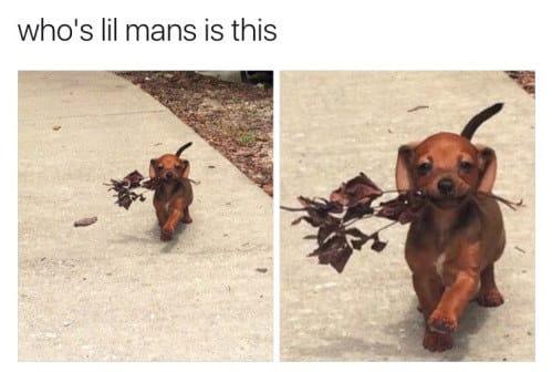 dog memes90