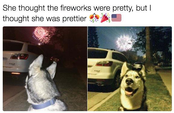 dog memes92