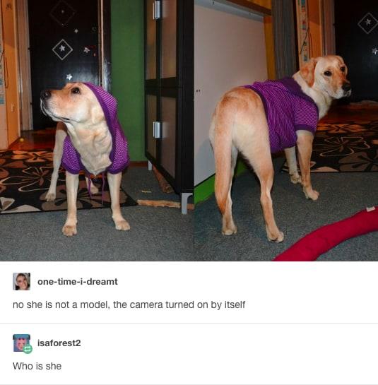 dog memes94