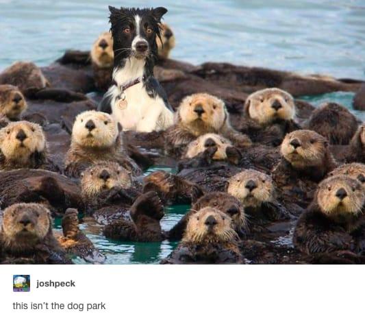 dog memes97
