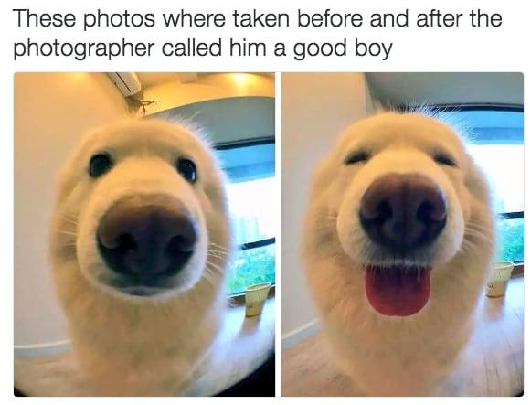 dog memes98