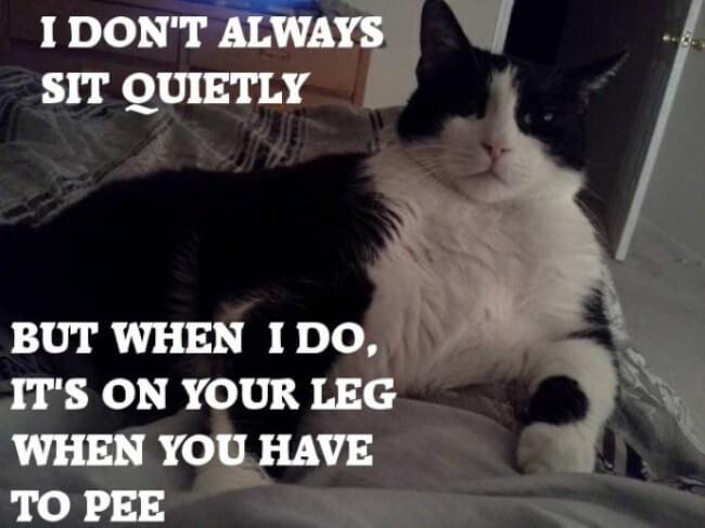 hilarious cat faces 11