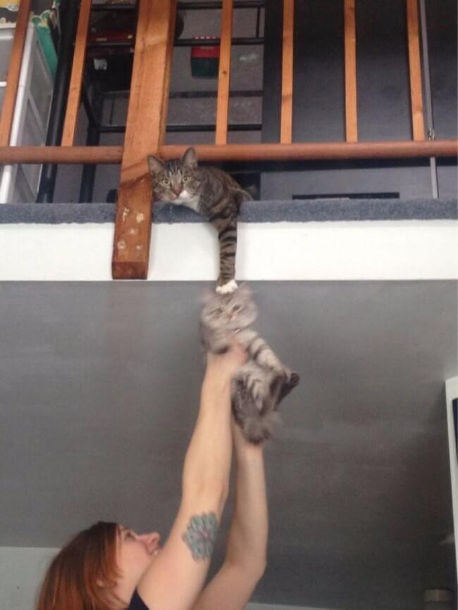 funny cat pics 13