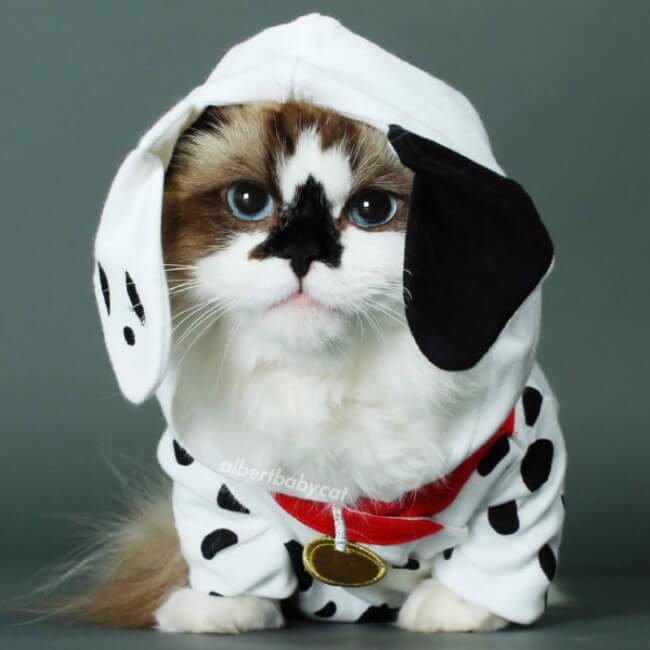 funny cat pics 20