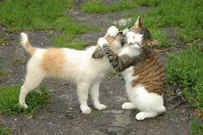 funny cat pics 21