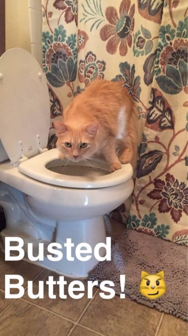 hilarious cat faces 5