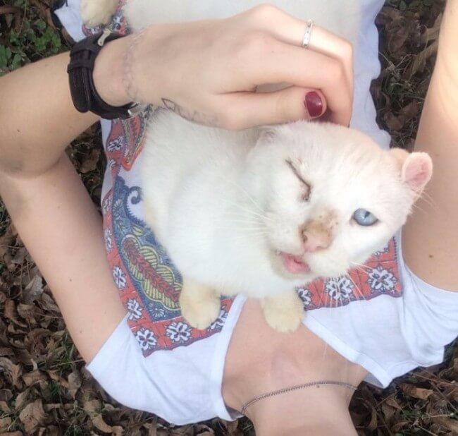 hilarious cat faces 7