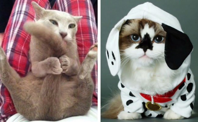 funny cat faces feat