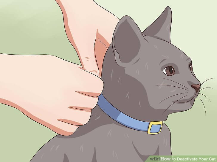 how to deactivate your cat 3