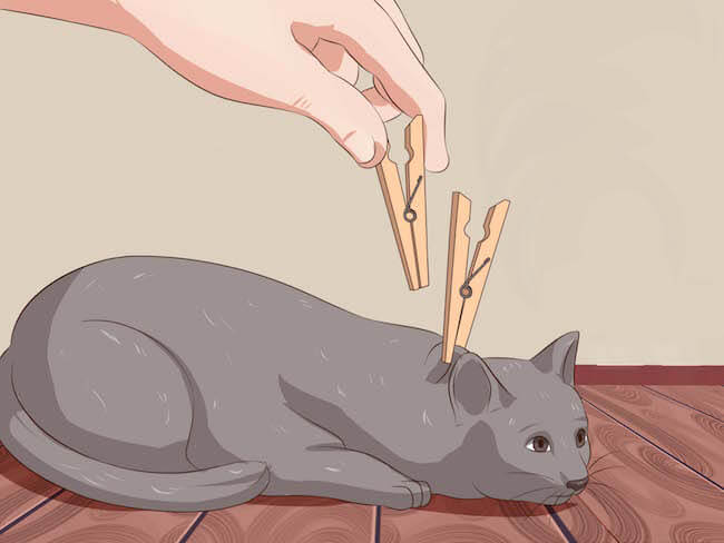 how to deactivate your cat