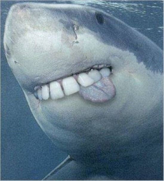 shark with funny teeth 10