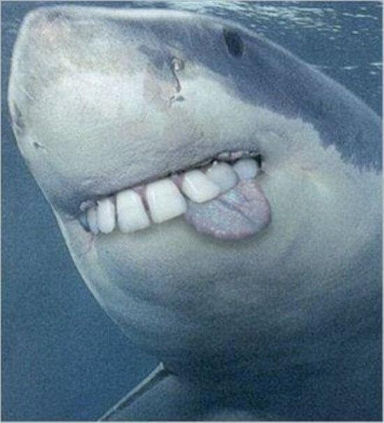 shark with funny teeth 10