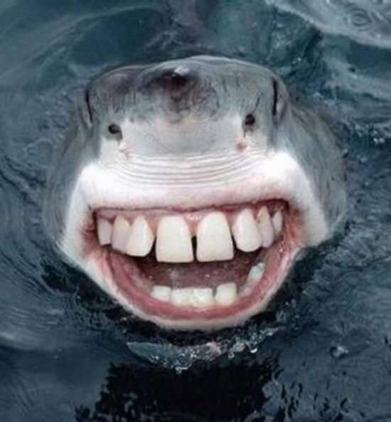 22 Shark With Human Teeth Pictures That Are Just Ridiculous