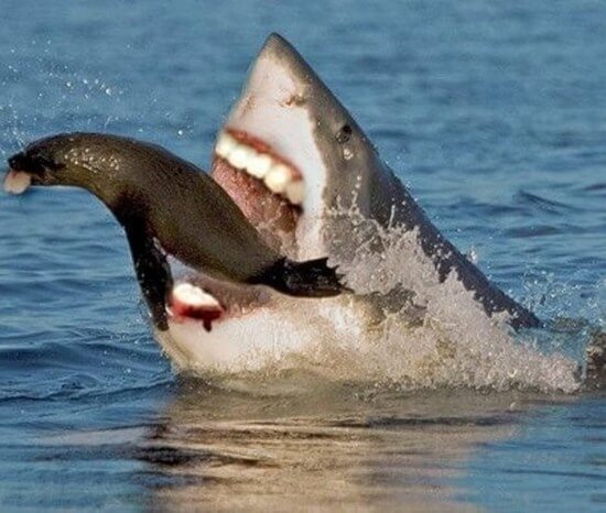 shark with funny teeth 12