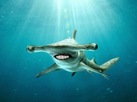 shark with funny teeth 13