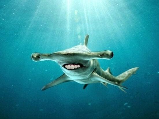 shark with funny teeth 13