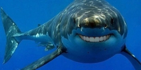 shark with funny teeth 14
