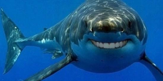 shark with funny teeth 14
