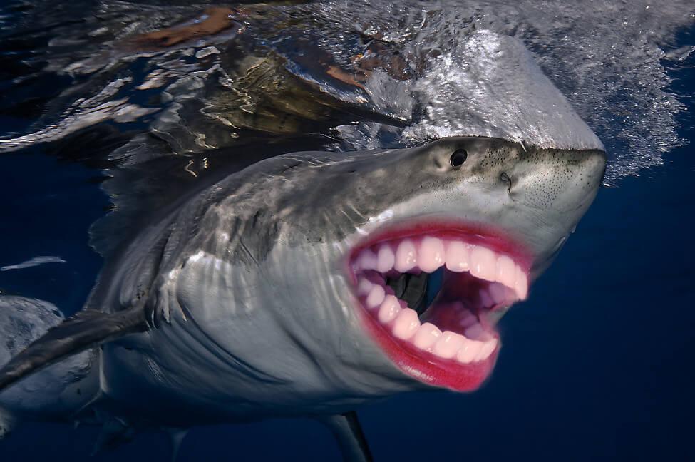 shark with funny teeth 18