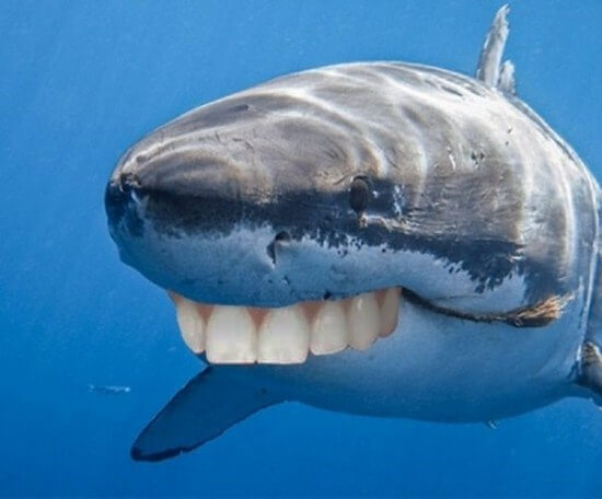 shark with human teeth 2