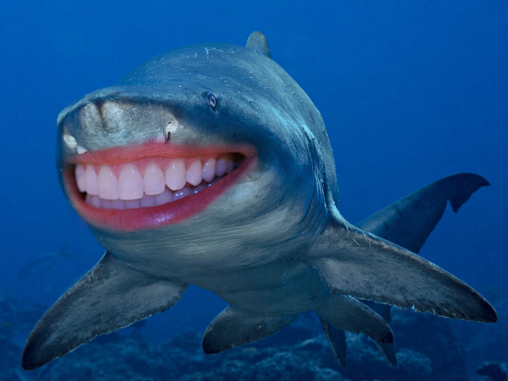 shark with funny teeth 20