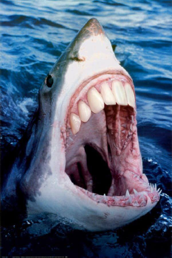 shark with human teeth 22