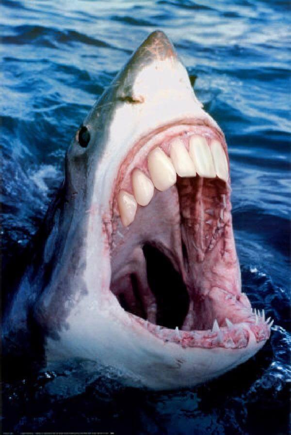 shark with human teeth 22