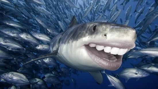 shark with human teeth 3