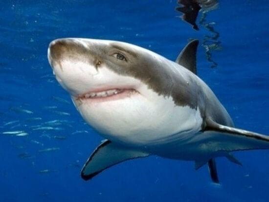 shark with human teeth 4
