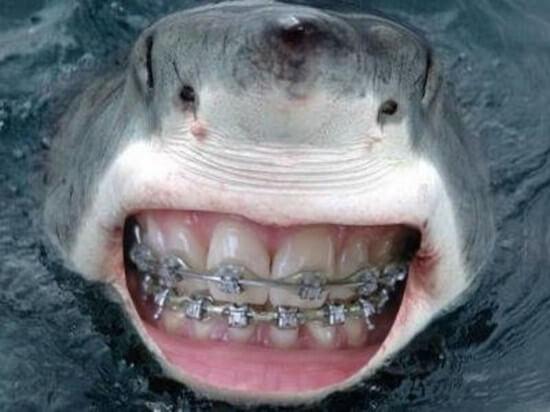 shark with funny teeth 6