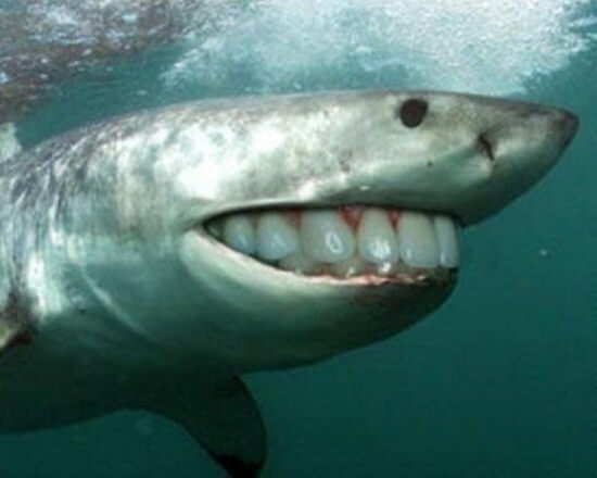 shark with funny teeth 7
