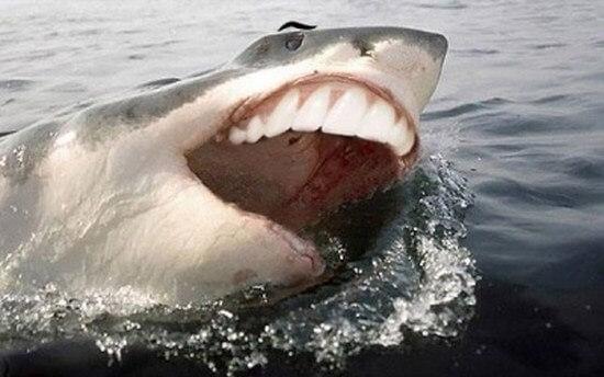 shark with funny teeth 8