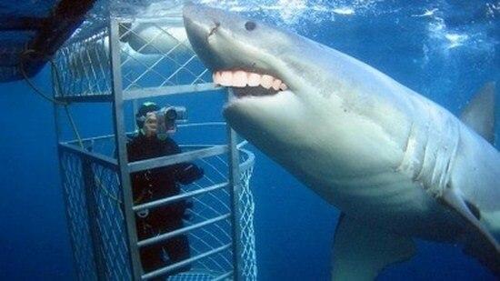 shark with funny teeth 9