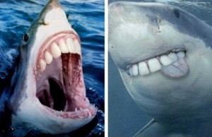 shark with human teeth feat