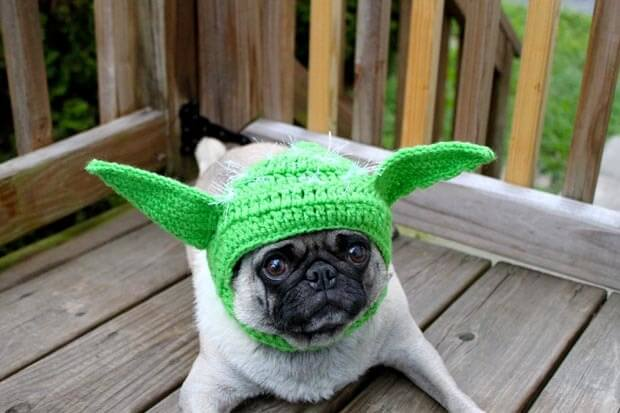 star wars pet costumes 10