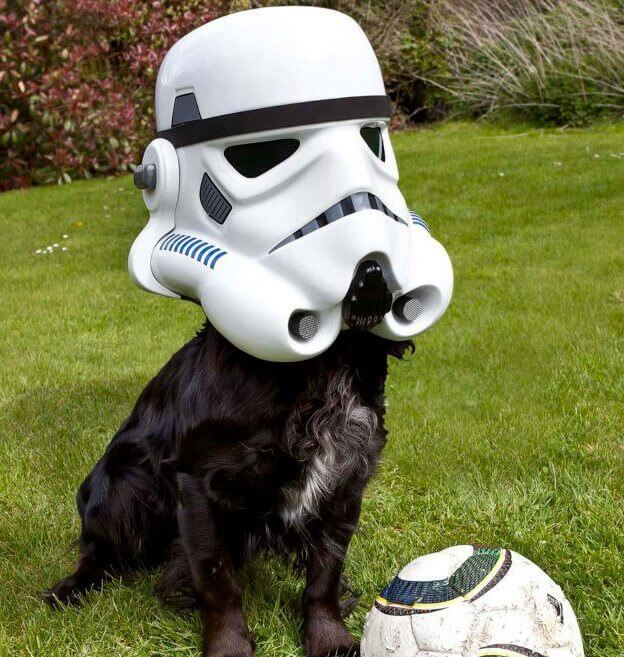 star wars pet costumes 13