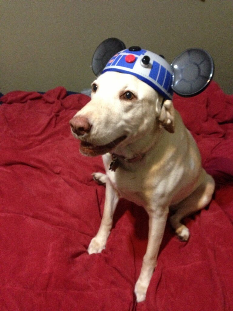 star wars pet costumes 14