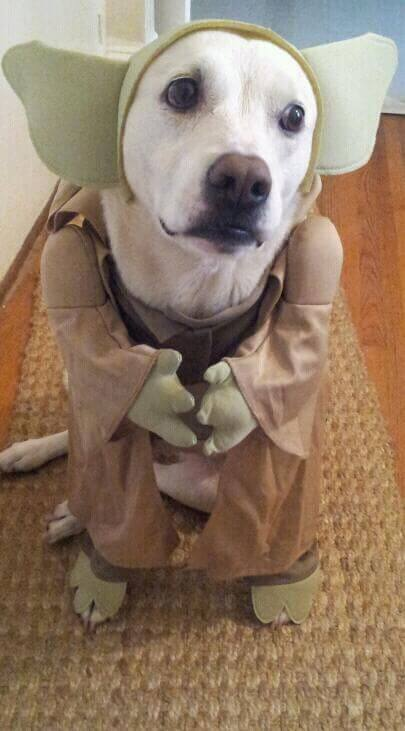 star wars pet costumes 16